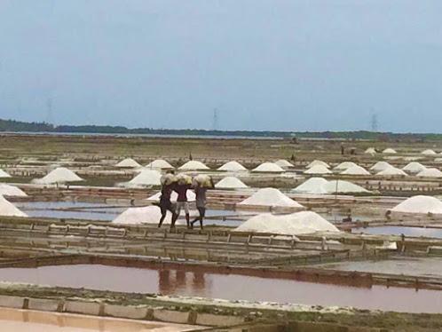 Puttalam Salt Ltd