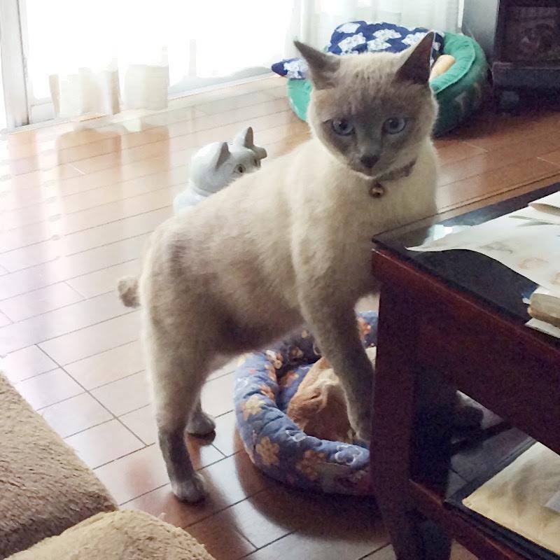 トモダチ猫