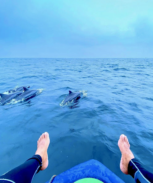 Dolphin and Whale Watching In Kalpitiya