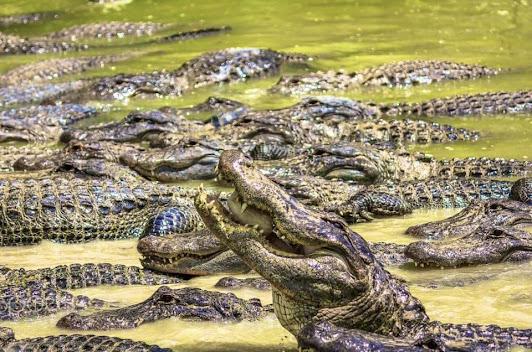 Crocodile Rock and Crocodile Point
