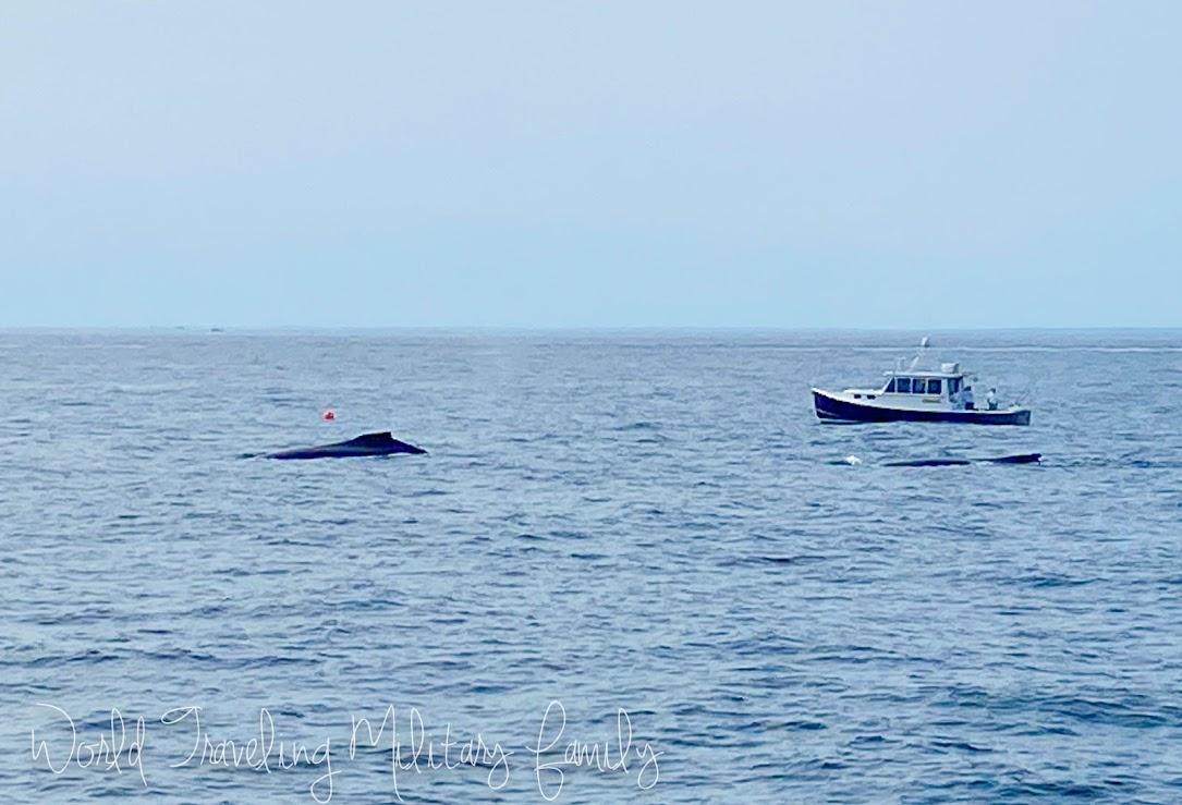 Cape ann whale watch boat whales