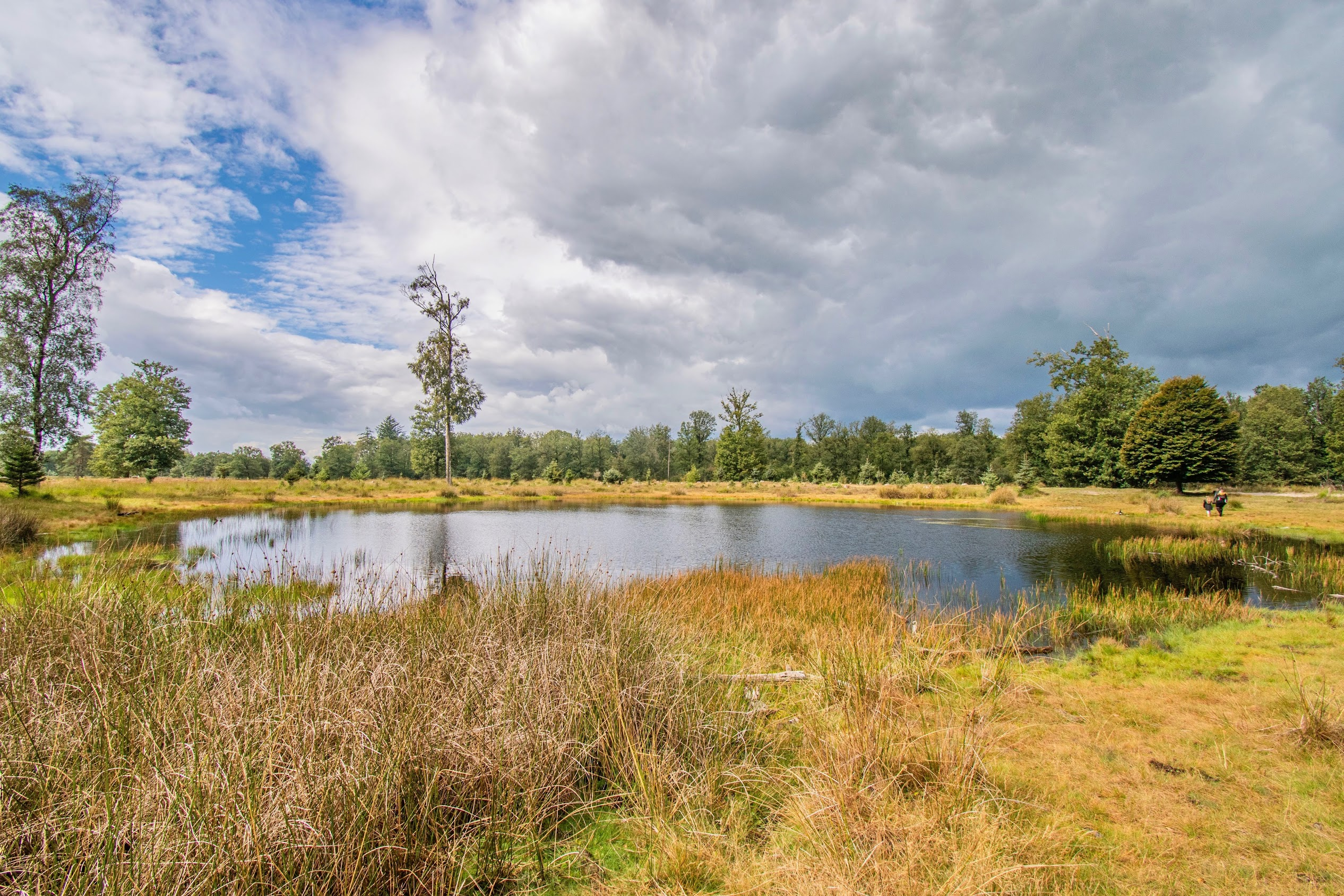 Drents-Friese-Wold