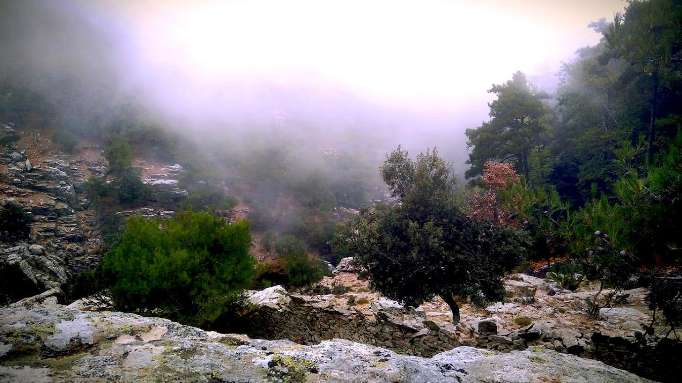 The fog rises