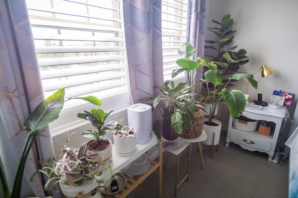 plants near window