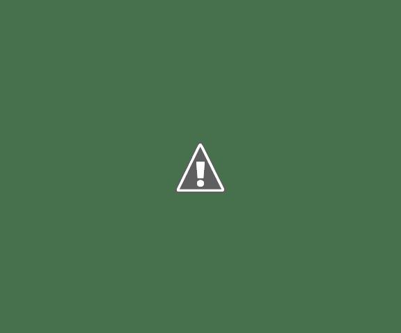 HERNANDO: Relevamiento de arbolado urbano en la ciudad