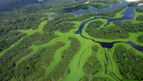 Complexo de Conservação da Amazônia Central
