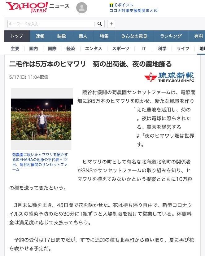 二毛作は5万本のヒマワリ 菊の出荷後、夜の農地飾る【琉球新聞・Yahoo!ニュース】