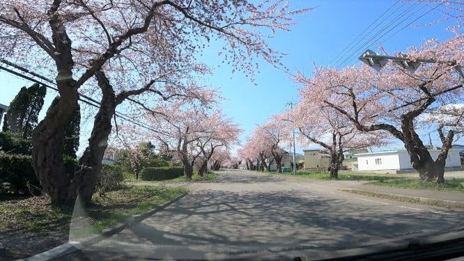 微笑み桜通り