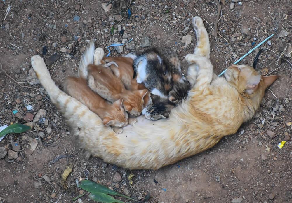 cat with her kittens in coronavirus pandemic 2020 life bengaluru.jpg