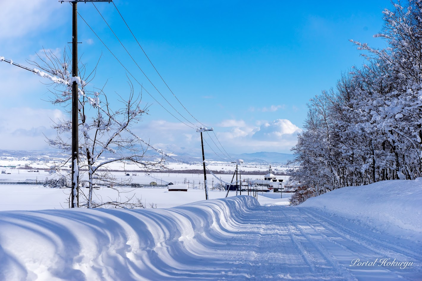 雪道に描かれた樹木のシルエット