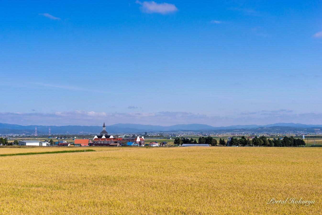 黄金の稲穂パワーが満ち溢れる北竜町の風景