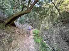 Сингл-трейл в лесу