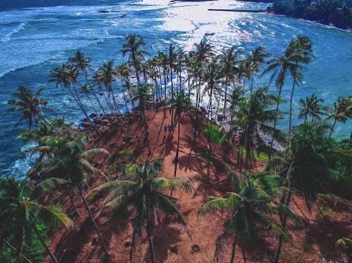 Coconut Tree Hill - Mirissa
