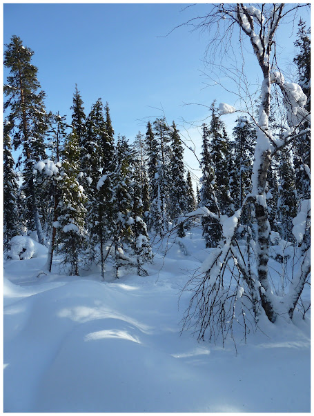 Promenade en terres same (frontière suédo-finlandaise) - Page 3 ACtC-3fUTyvRSNlSoOWW2ZDNzog7nofZiyE6PmFLk-s8Lc3hstjGuNuCwDR4_ee1FJK_sRapRyTcpbQ-NaepmUxUTu1PJ54S6L1774mETmGFetqgVhqS039GDQFXo62Wu-3jXYaDT04sfKk8e8DzCfoMZdDb=w455-h603-no
