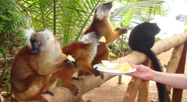 Madagáscar