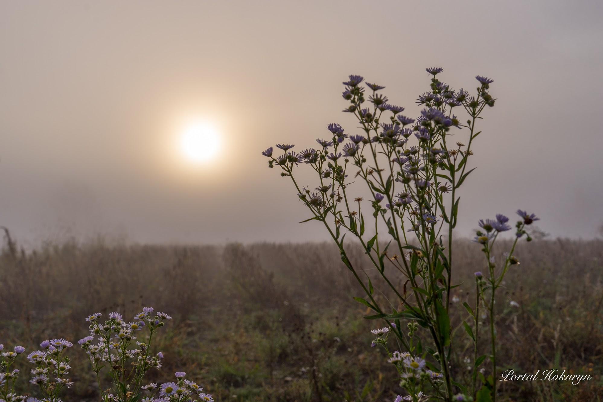霧の中の柔らかな光(眺望の丘にて・2020年10月8日)