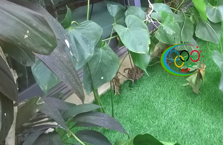 Thảm cỏ nhựa sân vườn mang lại sự Mới lạ từ sân vườn cho tới những bức vách