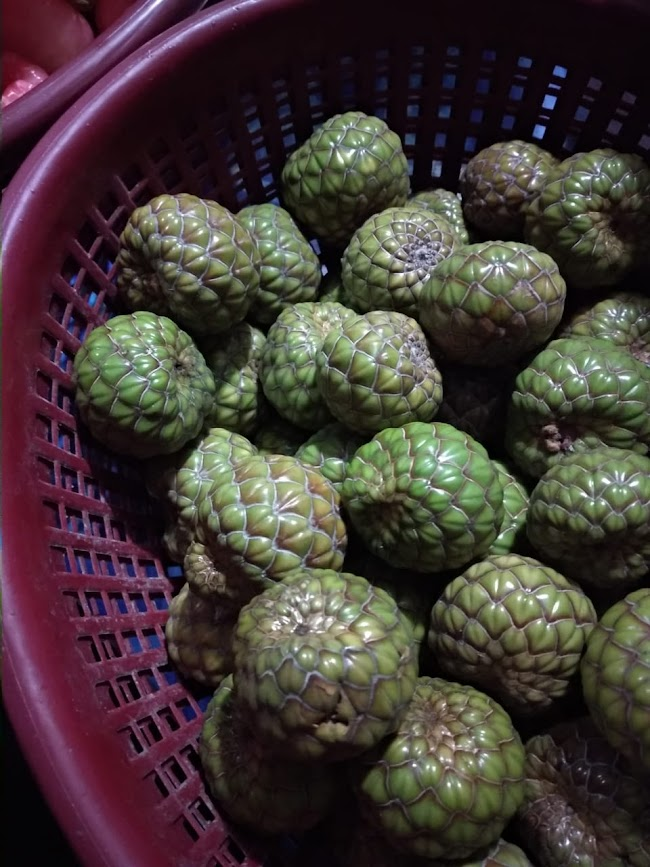Buah rumbia, Aceh