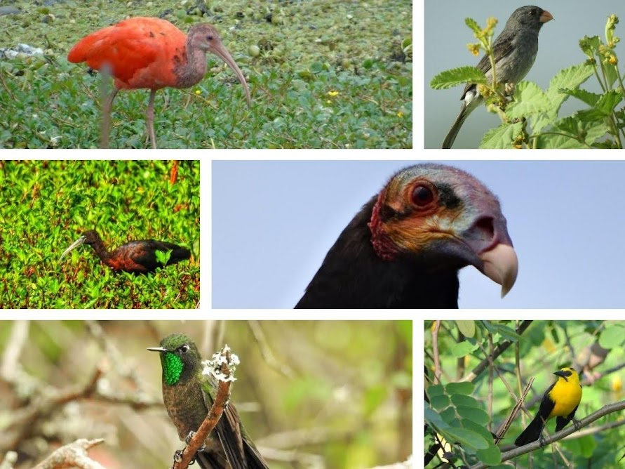 Nuevos reportes de aves en los humedales de Bogotá