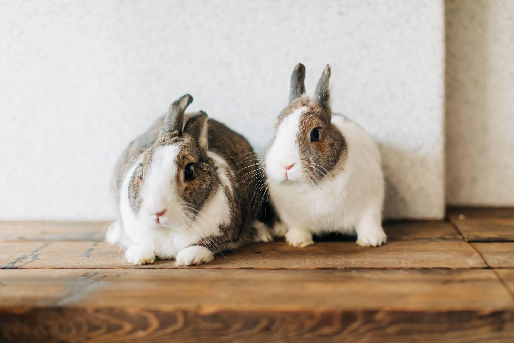寵物婚紗兔子篇 / 兔子 毛小孩 婚紗 / 美式婚紗婚禮 / 兔寶寶 婚紗, 今年春天,我們在 搖籃婚紗攝影棚 ,替Fish & Wolf 拍攝了這組 兔子寵物 婚紗,在溫暖的春季 , 兩人帶著各自的 毛小孩 , 搭配攝影棚的簡約復古,令人印象深刻。這是一次非常深刻的 兔子寵物婚紗 經驗,而棚拍後,我們又再前往海邊,追著暖陽和微風, 替他們拍攝AG專屬的 逐光 婚紗。