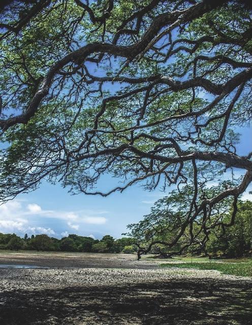 Anawilundawa Bird Sanctuary