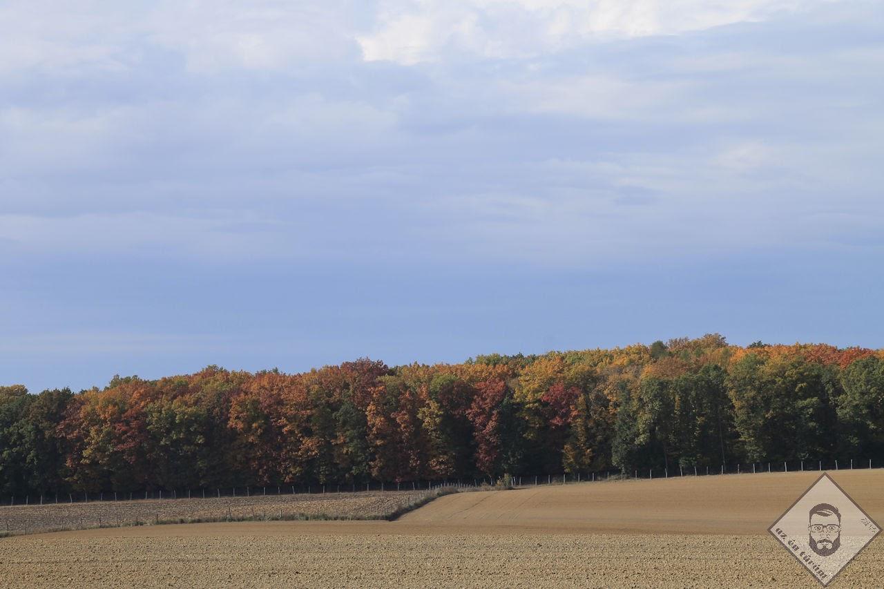 KÉP / Az ősz minden színe