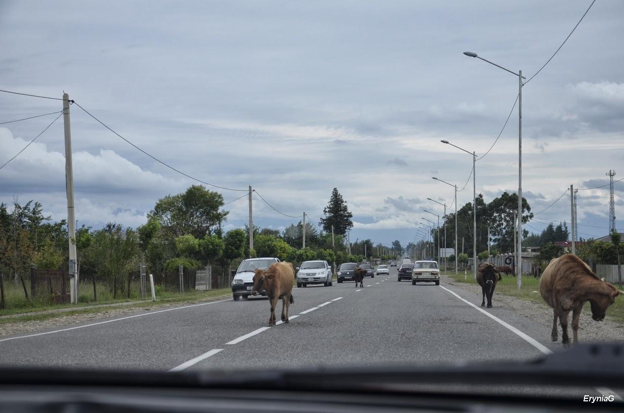 na drodze doZugdidi
