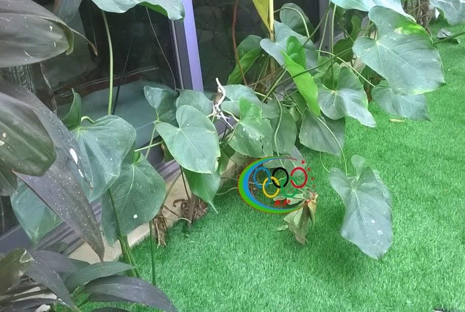 Cỏ nhựa nhân tạo làm sân chơi cho trẻ em nô đùa