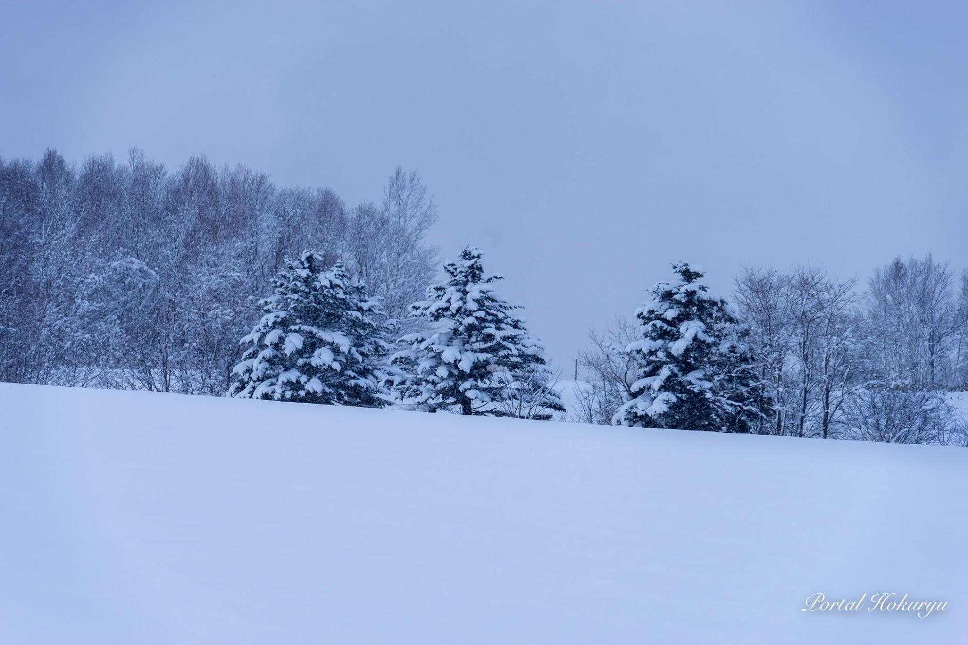 3本のクリスマスツリー