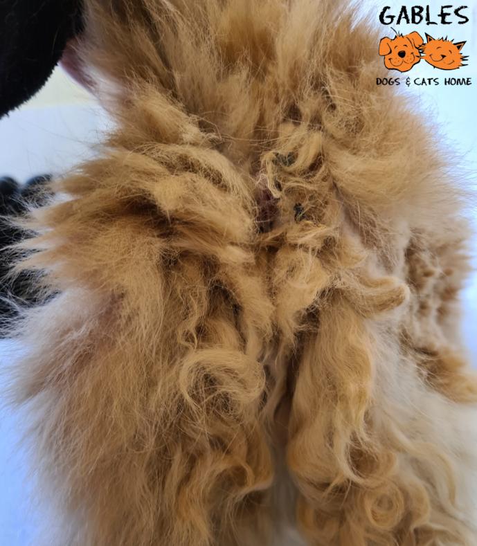 Matted fur