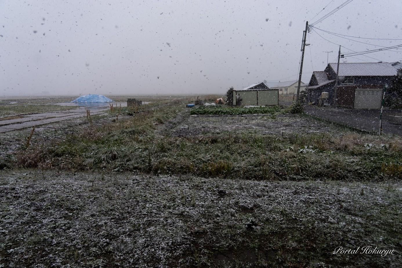 北竜町に雪が降り出しました