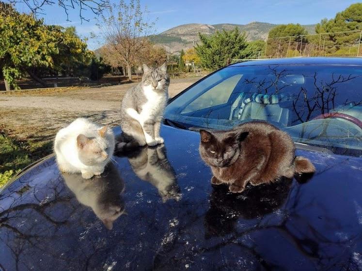 Переезд в Испанию с котиками-маскотиками или Навстречу ветру. Нулевой меридиан