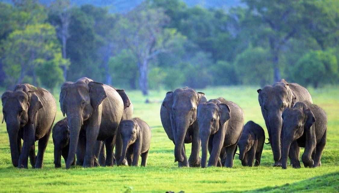 Kaudulla National Park