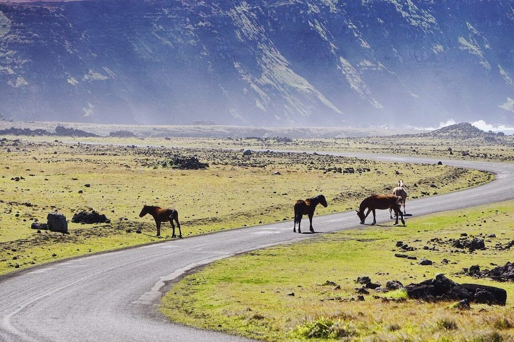 travel tips for chile feature image horses on chilean road