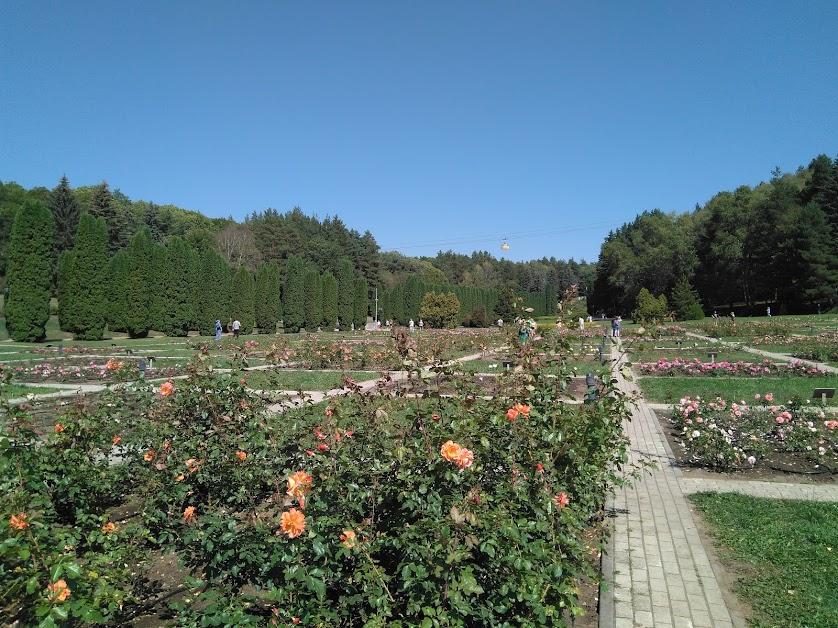 31. Кисловодск. 4 сентября. Долина роз в курортном парке.