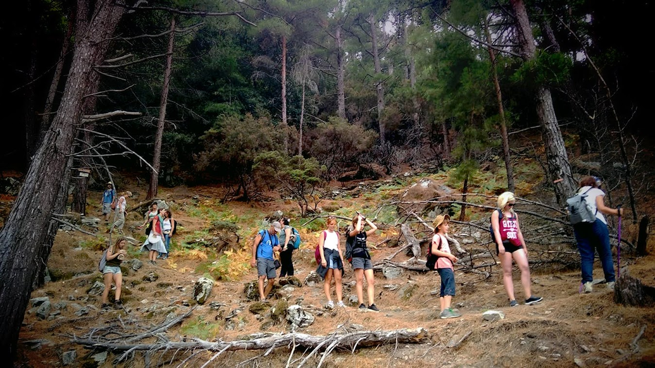 the group on our way through the forest