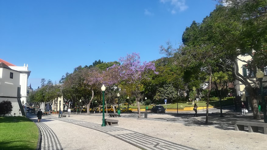 An almost empty Avenida Arriaga. The Jacarandas are in flower, beautiful as ever.