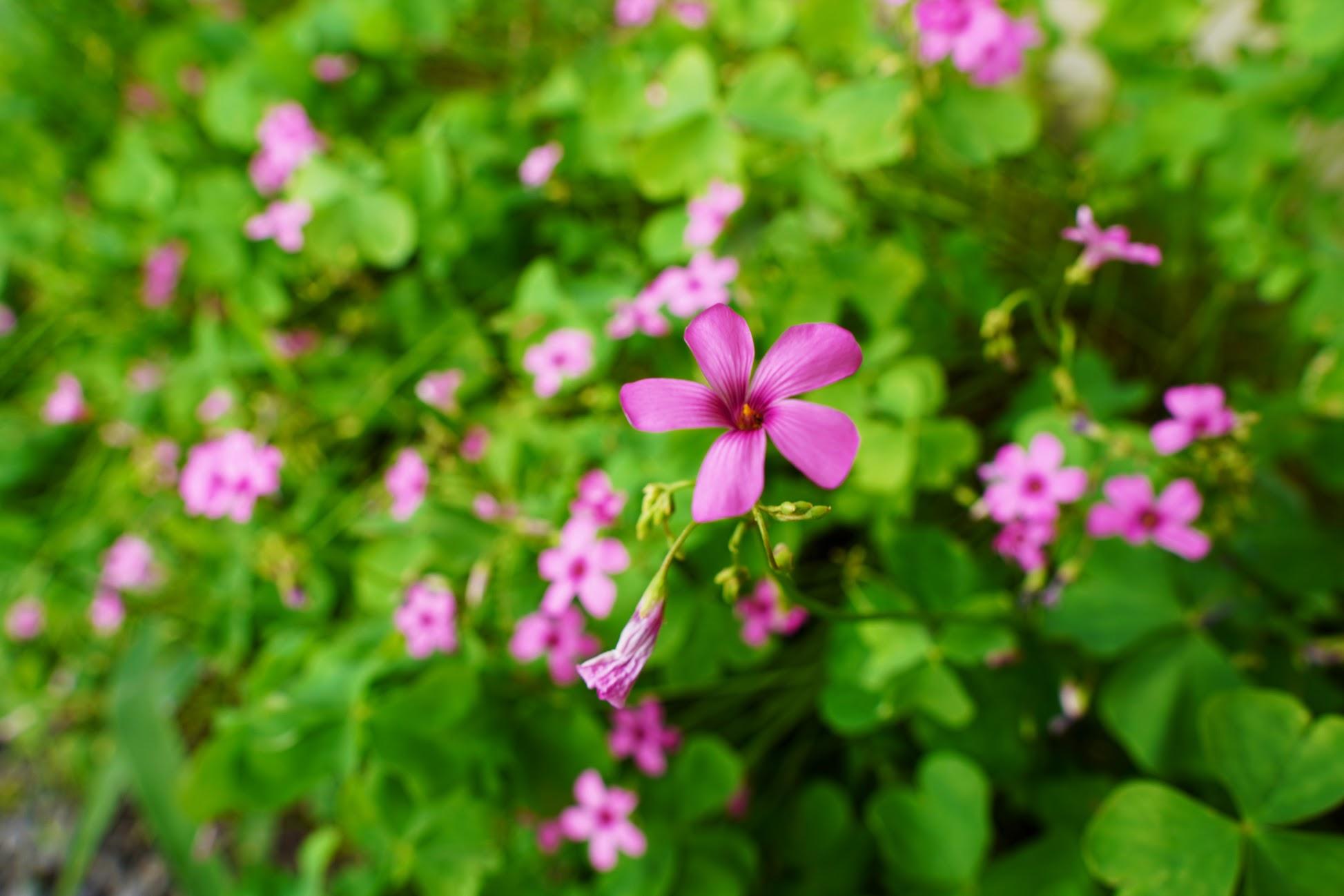 庭の花の写真