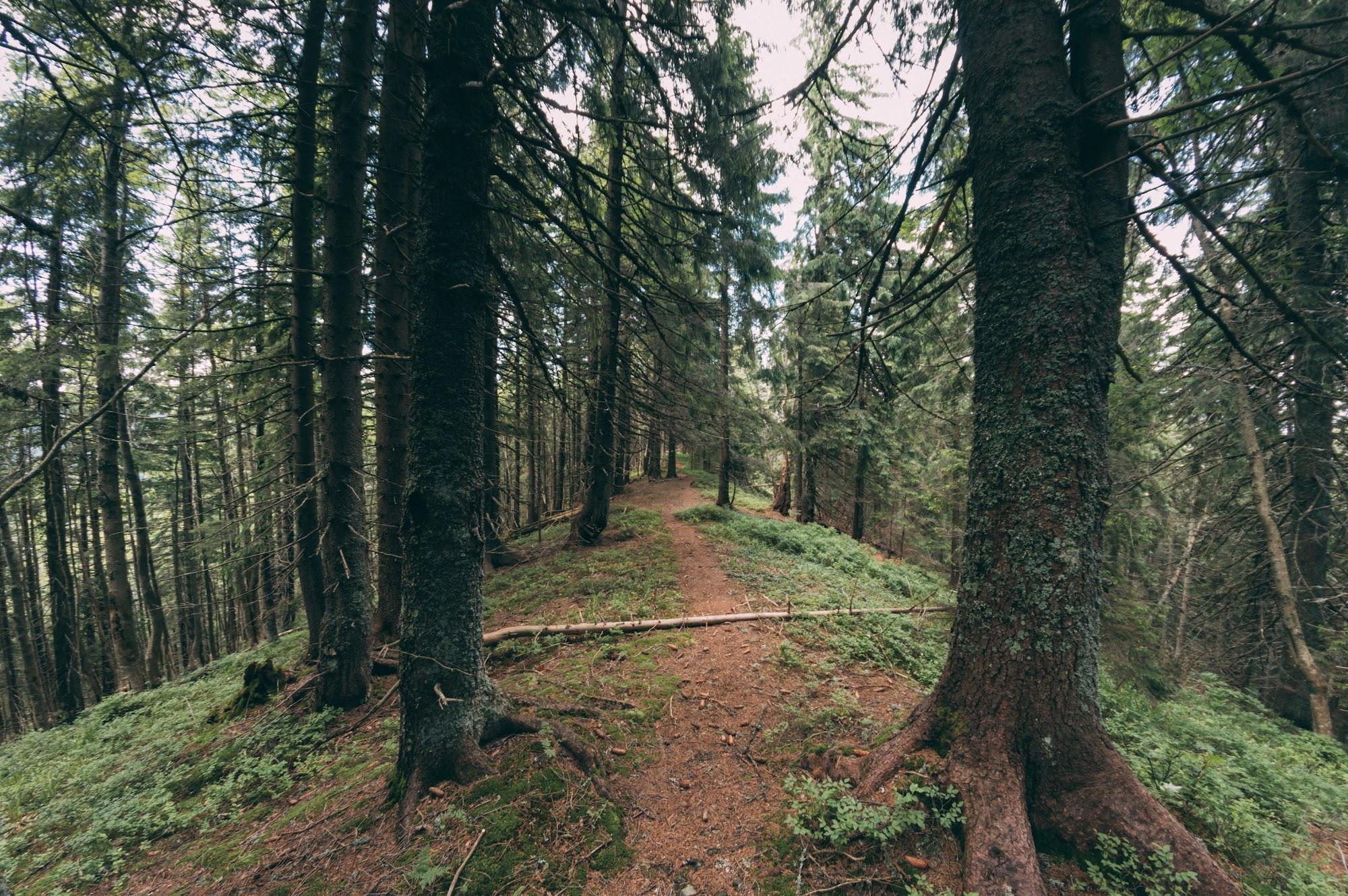 Хребет в лісі