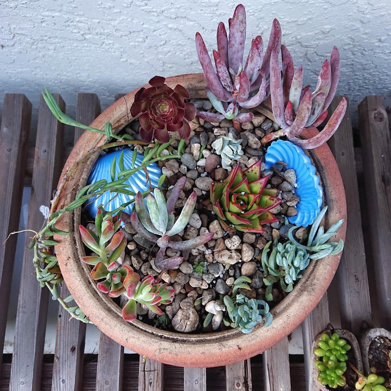 Reusing broken plastic clamshell container in a succulent arrangement.   FAFAFOOM STUDIO