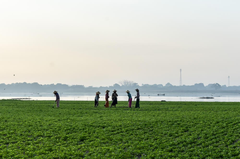 farmers in mandalay.jpg