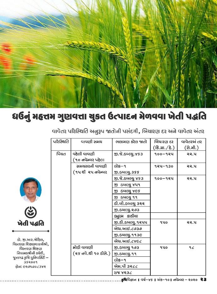 ખેતી પદ્ધતિ: ઘઉંનું મહત્તમ ગુણવત્તા યુક્ત ઉત્પાદન મેળવવા ખેતી પદ્ધતિ