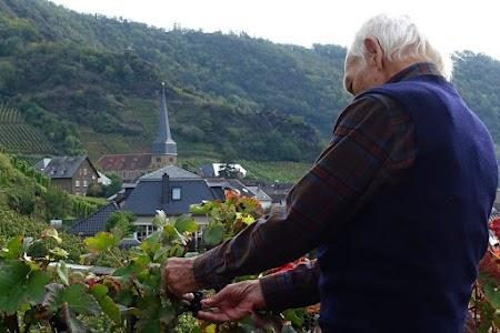 Weintrauben verführen zur Probe, ob sie auch schön süß sind.