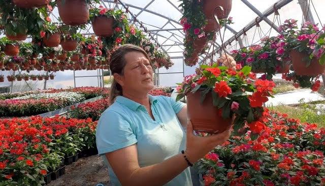 rasadnik cveca