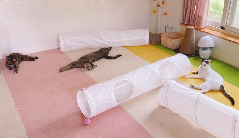 好味小姐的貓用TOLI寵物止滑地毯
