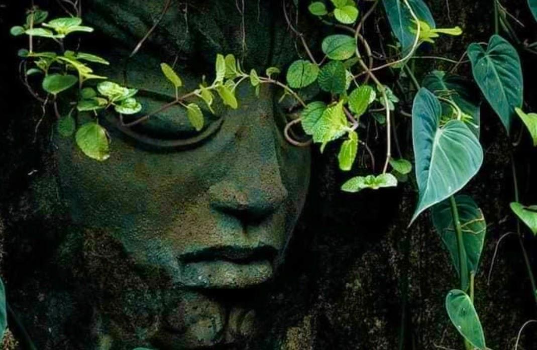 Brief Garden Aluthgama