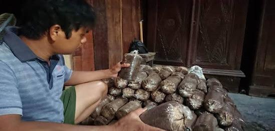 Budidaya Jamur Tiram Di Ngawi