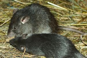 Council votes to restore pest control service