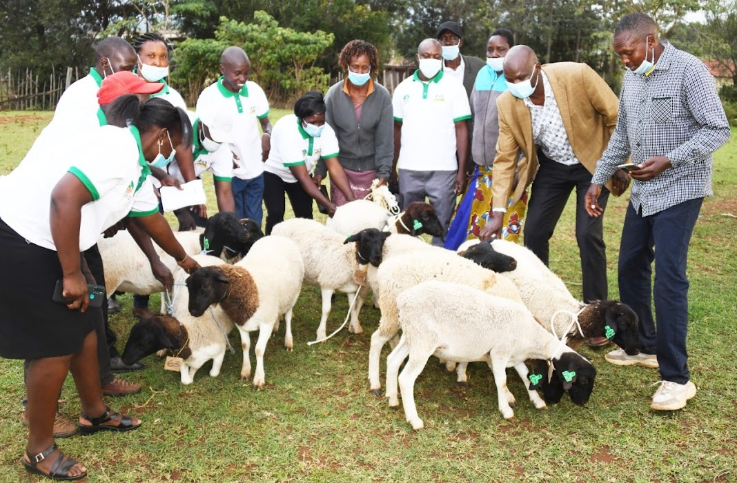 Eradicating Pests and Diseases in Baringo County