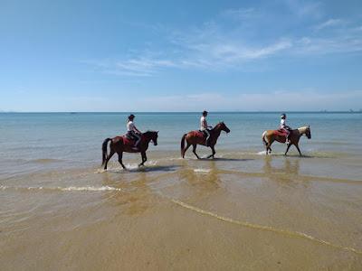 2-hours Krabi Horse Riding at Ao Nam Mao Beach